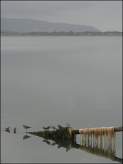 laguna (archilalla) Tags: italy reflection bird birds reflections italia uccelli laguna toscana riflessi orbetello uccello maremma riflesso lagunadiorbetello maremmagrossetana