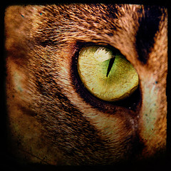 cat caught your eye? (anniedaisybaby) Tags: macro eye texture closeup cat feline ash experimentation cateyes catseye throughaglassdarkly bsquare artisticexpression welcometomyworld supershot ttv cc100 catcloseups macography closeupsandmacros ithinkthisisart catswithbigpersonalities onenesslabyrinth eyecandyartpost totallytextures excellentphotographer defendersmacroandcloseup wtmwgroupiconwinner betterthangood artevokesemotion highcreativity nikon8800users macrocateyeshowcase onewordwow furwithattitude