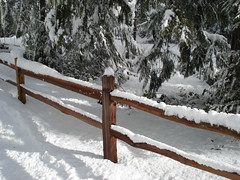 Some February Snow