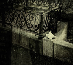 Cemetery black cat (gothicburg) Tags: artisticexpression darkdeviations