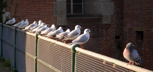 I'm not a seagull