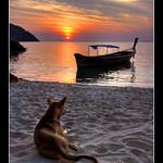 Dog Sunset @ Koh Lipe, Thailand