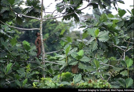 28 imágenes sorprendentes de un pueblo que aún vive en los árboles | Tree People por George Steinmetz ceslava 3