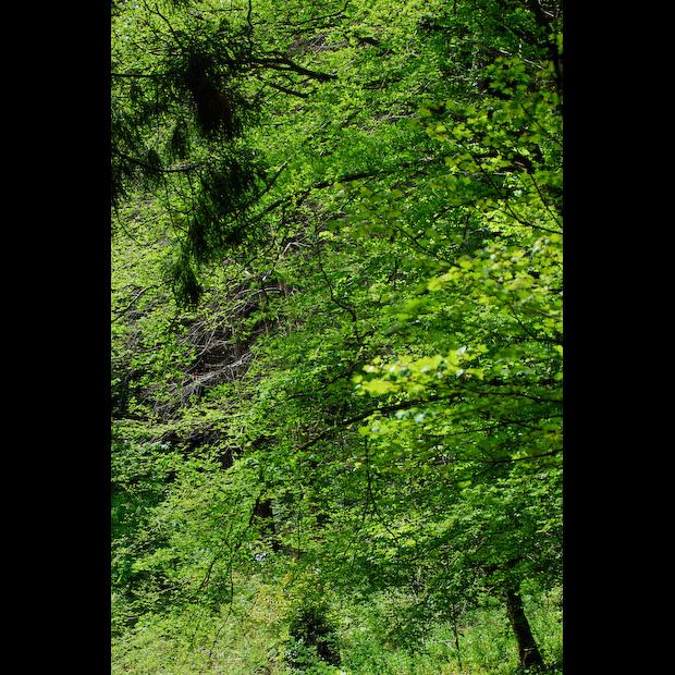 A Floresta...