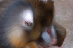 DSC_0661 (sener_tr) Tags: barcelona travel vacation animal d50 zoo photo spain nikon europa europe catalonia espana photograph animales catalunya animaux animali tier dyr gezi espanya avrupa makak hayvan barselona seyahat bahçesi ispanya macac turkishphotographer hayvanat katalunya zwierzat katalonya zvirat animalsk dierlijke elainten animaliskt