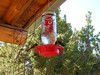 Hummingbird Treat