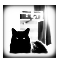 BOO! (Feathering the Nest) Tags: cat blackcat eyes picasa ears boo curtains pops vignette picnik vanitycase topspare