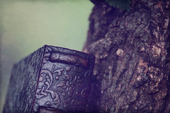 (Koribrooke.) Tags: tree texture book bokeh box storage bark treebark smoothbokeh koriephotography