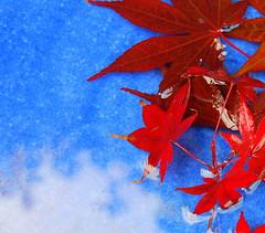Summer meets Autumn (10000 wishes) Tags: blue autumn red summer sky color reflection nature water leaves clouds nikon birdbath amazingtalent 25faves impressedbeauty aplusphoto superbmasterpiece d40x jalalspagesmasterpiecealbum platinumheartaward bestnaturetnc07