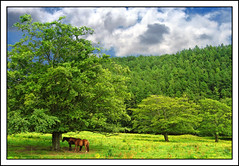 Lovely Day (edowds) Tags: blue trees sky horses field clouds scotland breathtaking inverclyde inverkip flickrscorer20 5bangs 15challengeswinner motifdchallengewinner top20summer top20summer20