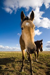 Blue Sky Horse (JBAT) Tags: horse animal bluesky planet wyoming polarizer 1022mm animalplanet greengrass animaladdiction