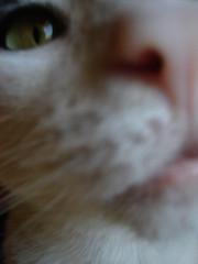 close man. (.through my eyes.) Tags: white black cute cat tuxedo top20bokeh