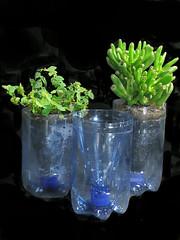 verde (celia cristina, a achadora) Tags: pet plantas handmade mosquito recycle reciclagem dengue reciclados