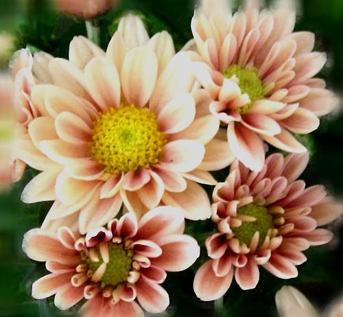 Flores..