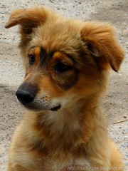 Anteojito retrato (DrGEN) Tags: dog pet brown santafe argentina animal animals puppy blog yo perro cachorro rosario animales gen marron mundo mascota ceres veo drgen