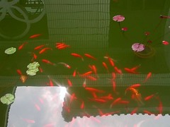 Fish In A Pond (fewstingscorpio) Tags: china trip travel fish water tour orient vactions
