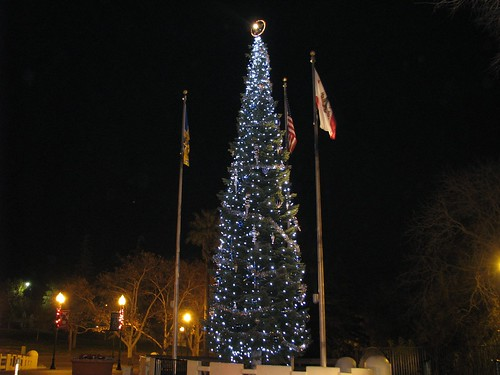 vacaville tree 2007