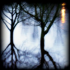 Reflections - II (Xerones) Tags: leica york trees river flooding flood dusk yorkshire sp ouse viewfrommywindow northyorkshire dlux thecontinuum seenability december2007 pd60710