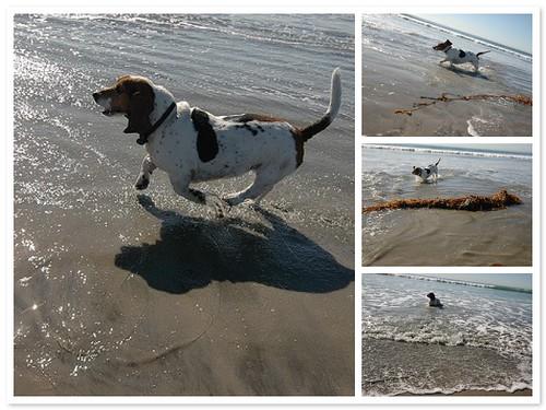 Molly the Beach Bunny 1/13/08