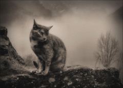 La Lluna, la mare gata. (Ferran.) Tags: cats nature cat natura catalonia soe pyrenees lluna ripolles queralbs camidenuria ruira thecatwhoturnedonandoff