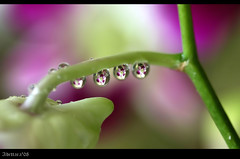 ~Pearls Of Vision~ (Adettara Photography) Tags: orchid macro drops soe cubism naturesfinest blueribbonwinner splendiferous supershot outstandingshots goldenmix golddragon abigfave anawesomeshot aplusphoto ultimateshot flickrplatinum irresistiblebeauty superbmasterpiece infinestyle diamondclassphotographer flickrdiamond ysplix excellentphotographerawards theunforgettablepictures thatsclassy brillianteyejewel overtheexcellence macromix wonderfulworldmix macromarvels betterthangood theperfectphotographer goldstaraward excapturemacro adettara ahqmacro pearlsofvision