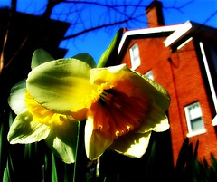 Flowers on Fontaine (Remix) (mightyquinninwky) Tags: flowers house flower tree brick green leaves yellow geotagged spring bright kentucky lexingtonkentucky bluesky downtownlexington picnik sunnyday chevychase fontaineroad chevychasearea fayettecountykentucky centralkentucky thebluegrassstate geo:lat=38028022 geo:lon=84487159