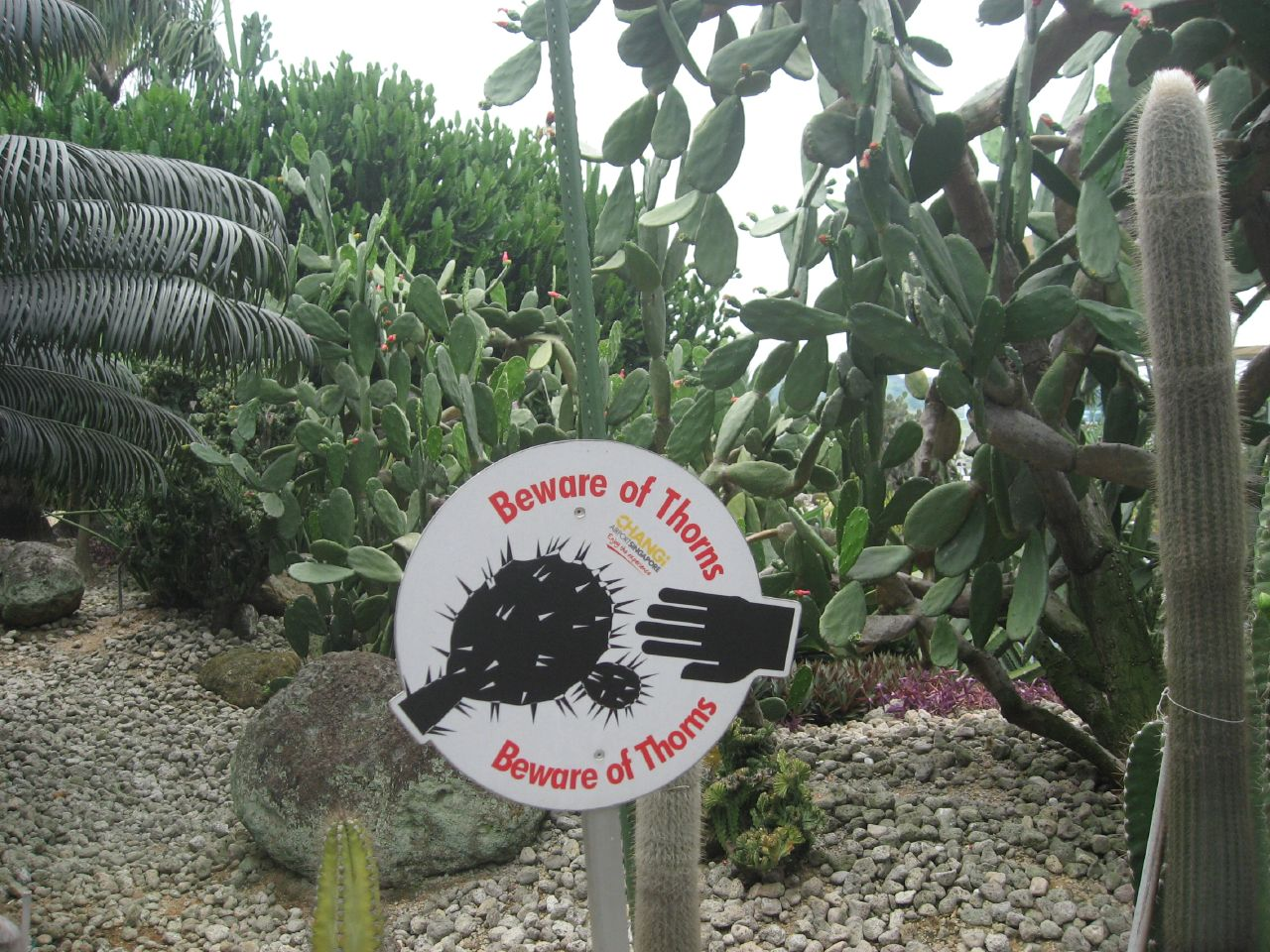 Singapore's airport features its own cactus garden