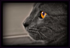 cateye (unonymous) Tags: cambridge cats animals photoshop lightroom unlimitedphotos flickrlovers