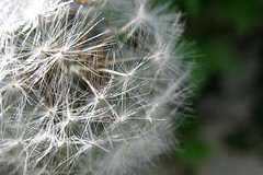031-1 (jmmuggianu) Tags: flower fleurs jardin printemps
