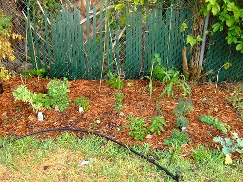 garden 5-21-08 017