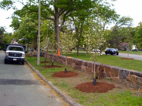 New Trees at Jamaica Pond