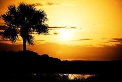 St. Augustine sunrise (eyecbeauty) Tags: sun sunrise bravo searchthebest florida palm soe takeabow saintaugustine supershot golddragon mywinners picturestosmileabout theperfectphotographer thebestpicturegallery spiritofphotography
