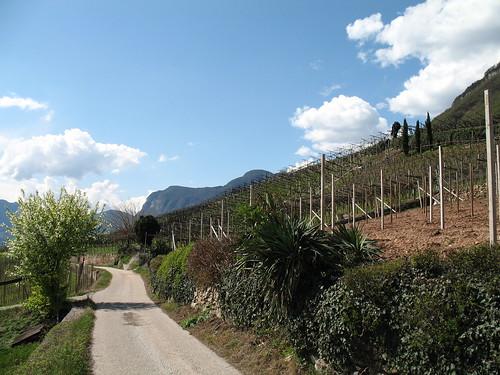 Gemütlicher und leichter Wanderweg von Tramin nach Kurtatsch - südliches Fläir an allen Ecken