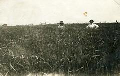 [COLORADO-J-0007] Stratton Rye Field