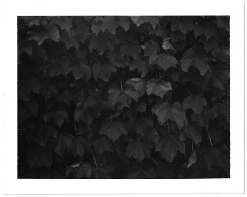 pola ivy �  10.21.07