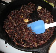 Grasshoppers sauteed in oil with garlic