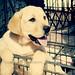 子犬:Argentino!
