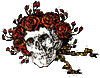 Grateful Dead - Skull and Roses