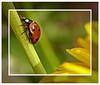 Escalade. (LouisY55) Tags: macro beetle photoquebec lysdor