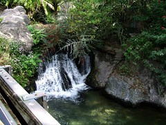 (Shane Henderson) Tags: waterfall disneyworld animalkingdom baylake