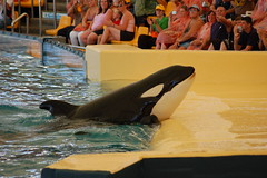 Orcas del Loro Park, Tenerife