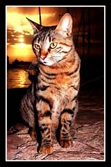 Romero cat - Aqaba (t7l4u) Tags: sunset cat redsea jordan romero aqaba canonefs1855mmf3556ii canon400d