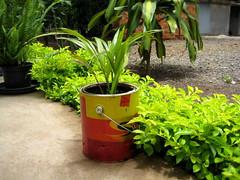 reciclado (parttimefarm) Tags: plants brasil recycle chacara echapora paintcan
