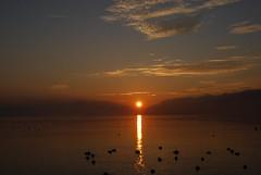 A new day... (claudia stucki) Tags: morning sky sun birds clouds sunrise schweiz switzerland early himmel wolken svizzera enten vgel sonne sonnenaufgang morgen wetter zrichsee frh wdenswil wdi