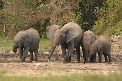 Elephant_03©Copyright_Reto Kuster_E-Mail kuster.reto@gmx.net