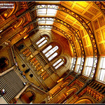 Perspective of London Natural History Museum