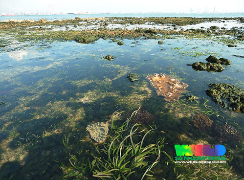 Cyrene Reef: seagrass and reefs