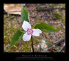 Painted Trillium (Mountain Visions) Tags: pentaxsmcpda35mmf28