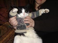 DSC04393 (dtgutman) Tags: baby sweater knitting knit maus sockotta kiek kieker