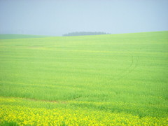 slovakia. misty green (kexi) Tags: blue sky green field yellow misty spring nikon pastel horizon may tranquility coolpix fields slovensko slovakia simple 2008 easterneurope instantfave mywinners flickrelite